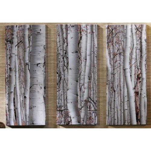 Canvas Print Three Piece Birch Trees (each Piece Sold Separately)