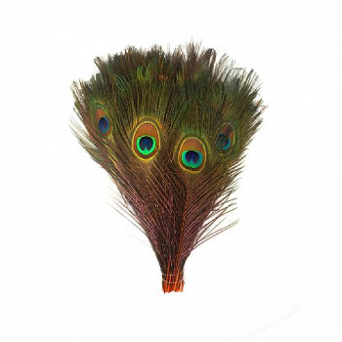Peacock Feathers 35in-40in Orange