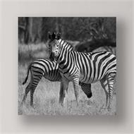 Canvas Print Zebras Black And White (discontinued)