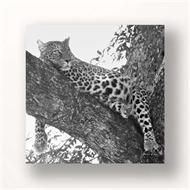 Canvas Print Leopard Black And White (discontinued)