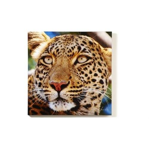 Canvas Print Leopard Head (discontinued)