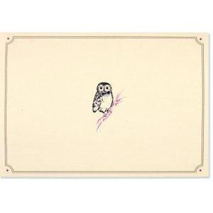 Boxed Card Blank Owl Portrait