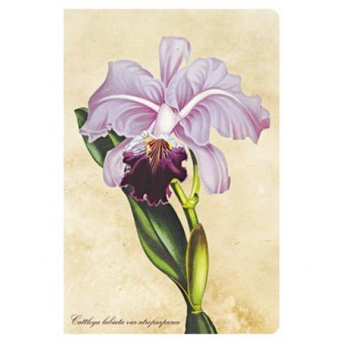 Journal - Mini - Lined - Botanical Brazillian Orchid