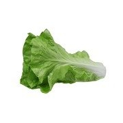 Fake Fruit Large Lettuce