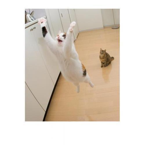Birthday - Airborne Cat