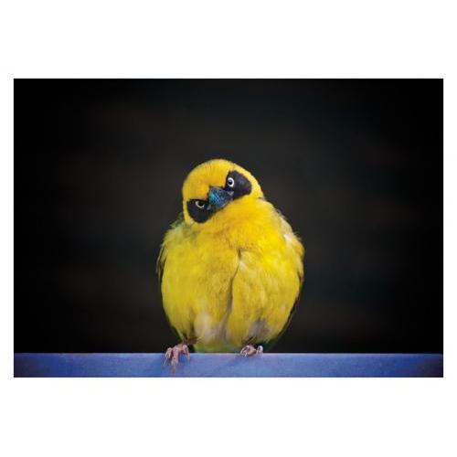 Birthday - Yellow Bandit Bird