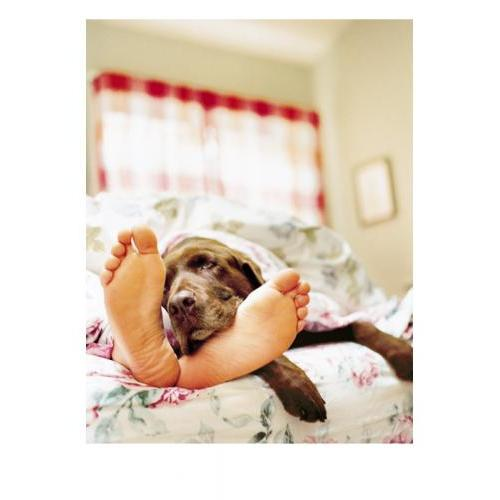 Get Well - Sick Dog & Feet