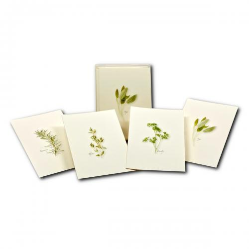 Boxed Card - Herb Assortment 2