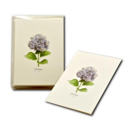 Boxed Card - Hydrangea