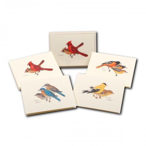 Boxed Card - Peterson Bird Assortment