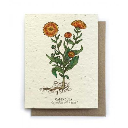 Any Occasion -  Calendula