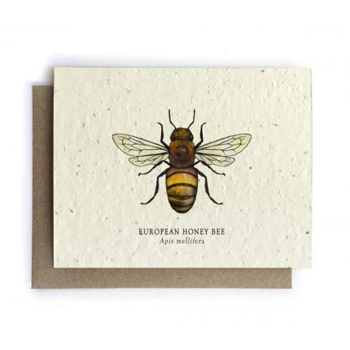 Any Occasion -  Honey Bee