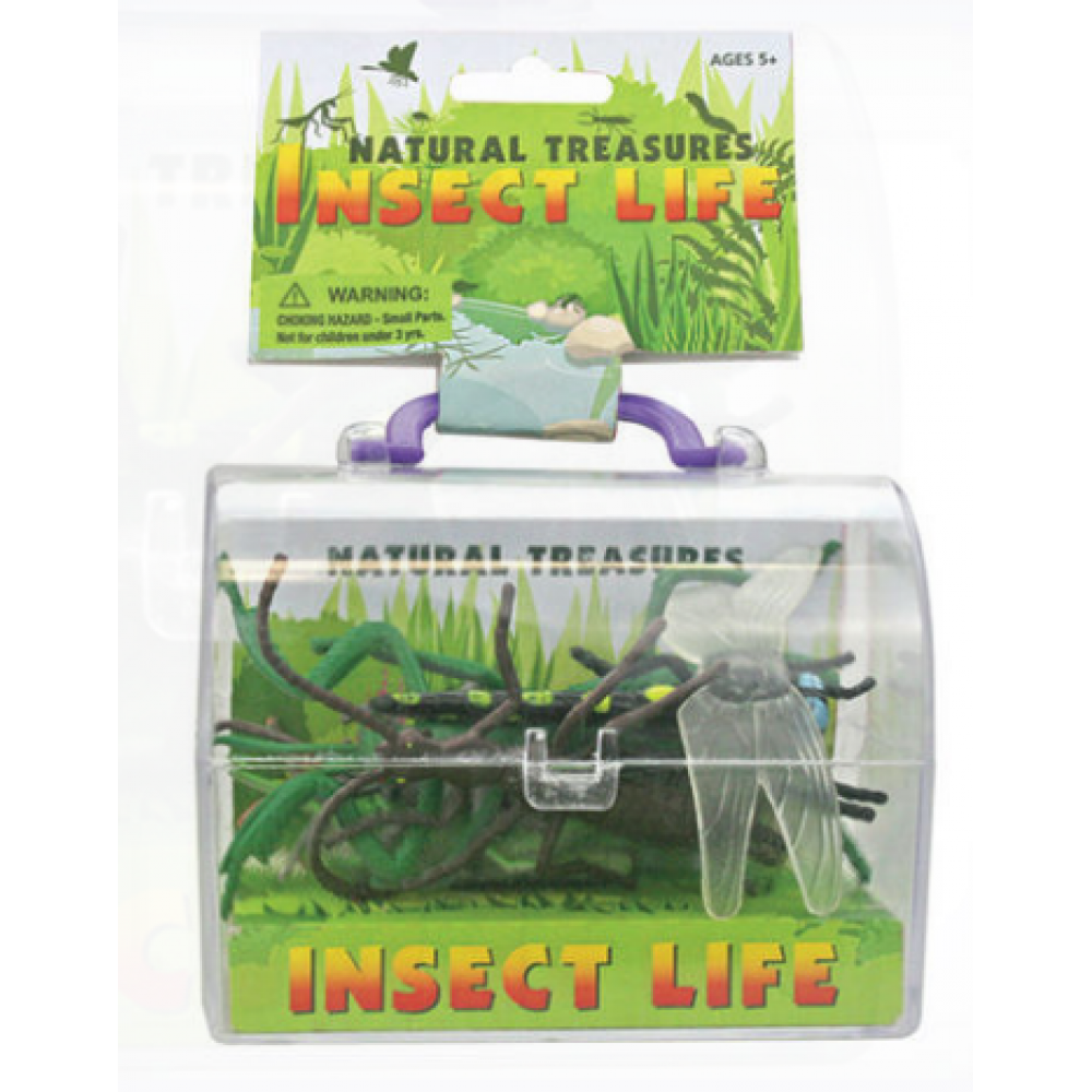Treasure Chest Insects