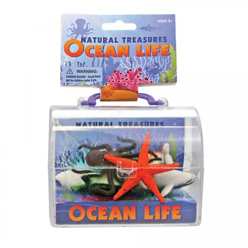 Treasure Chest Ocean Life