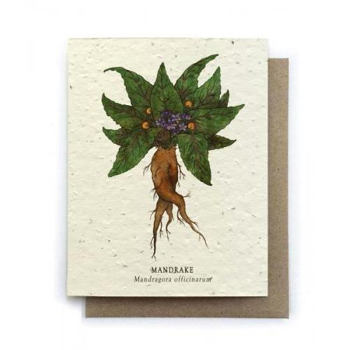 Any Occasion - Plantable Seeds - Mandrake