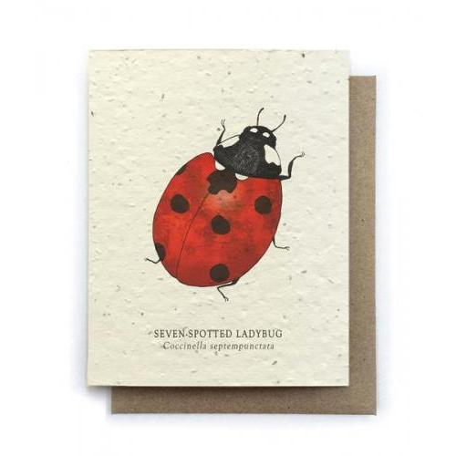 Any Occasion - Seven-spotted Ladybug