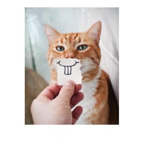 Birthday - Cat Front Teeth