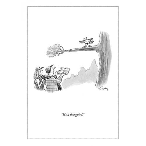 Any Occasion - New Yorker - Thongbird