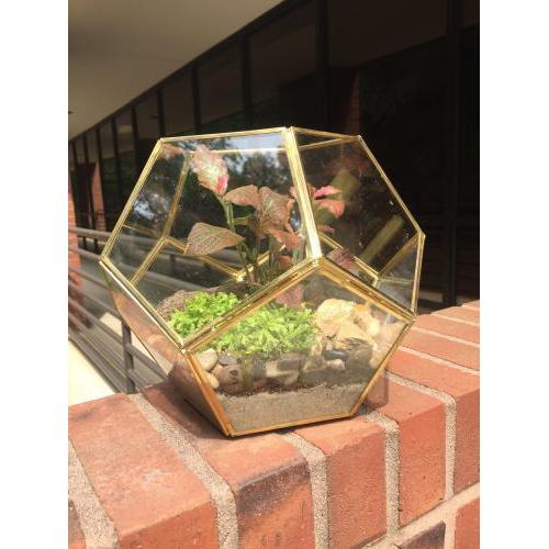 Terrarium Glass Geo Pentagon-panel 8inch