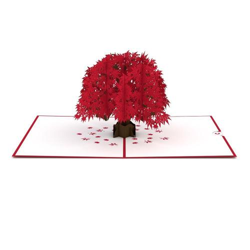 Any Occasion - Japanese Maple Tree