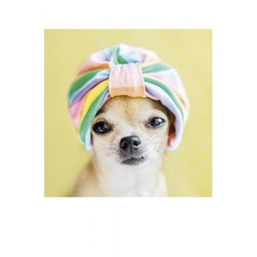 Birthday - Dog Turban