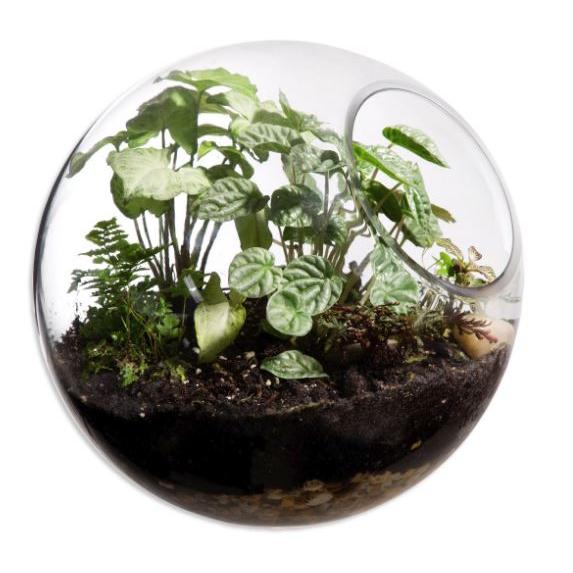 Decorative Garden Terrarium Glass Round