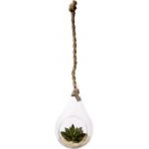 Decorative Garden Terrarium Glass Hanging 20in Rope
