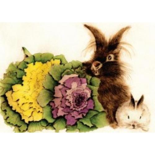 Any Occasion - Rabbit And Lettuce