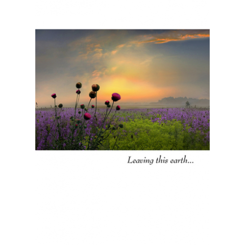 Sympathy - Purple Flowers And Sunset