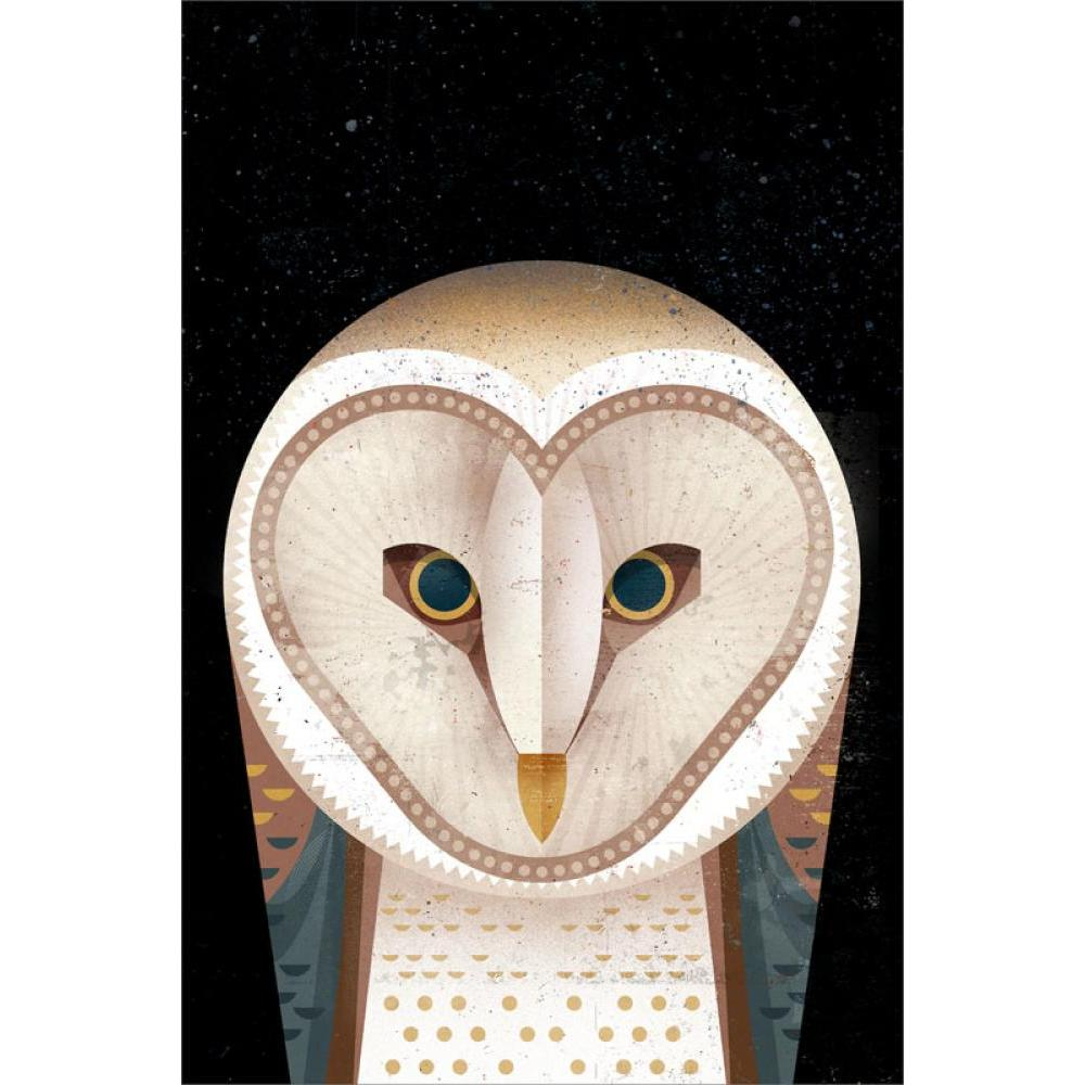 Any Occasion - Barn Owl