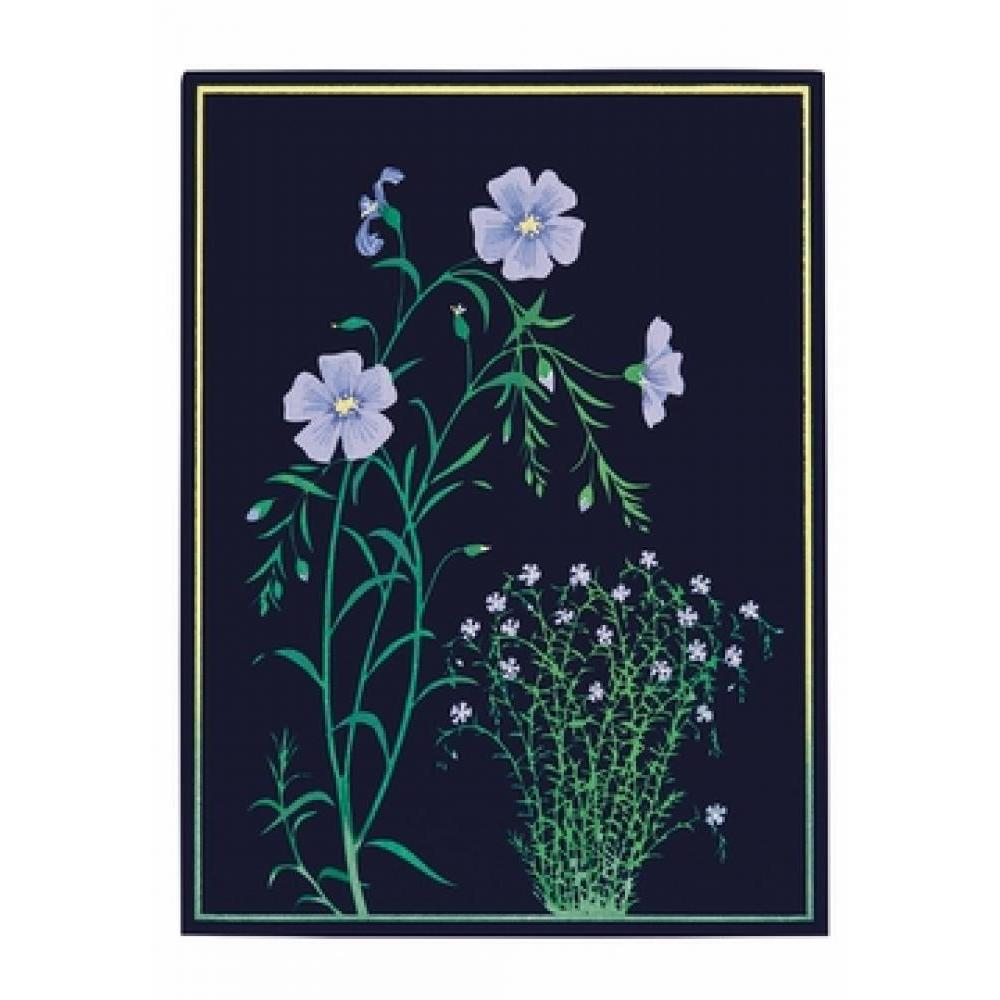 Boxed Card - Kate Krasin - Blue Flax