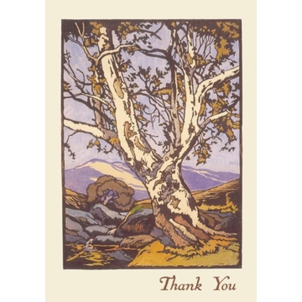 Boxed Card - William S Rice - Western Sycamore