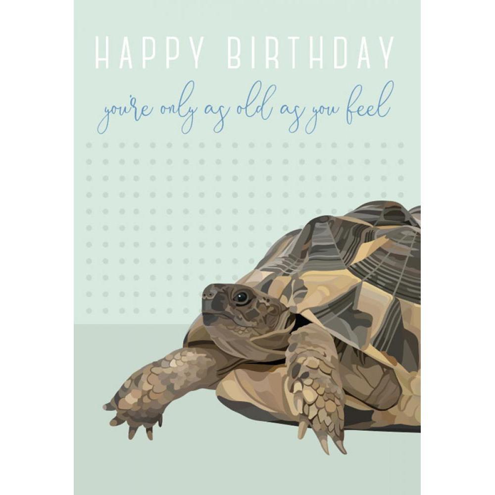 Birthday - Turtle - Arch & Ivy