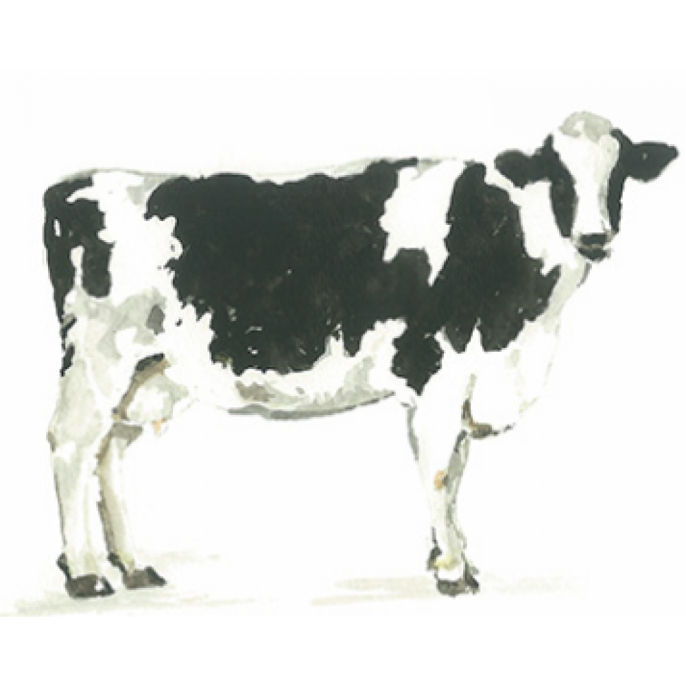 Any Occasion - Cow