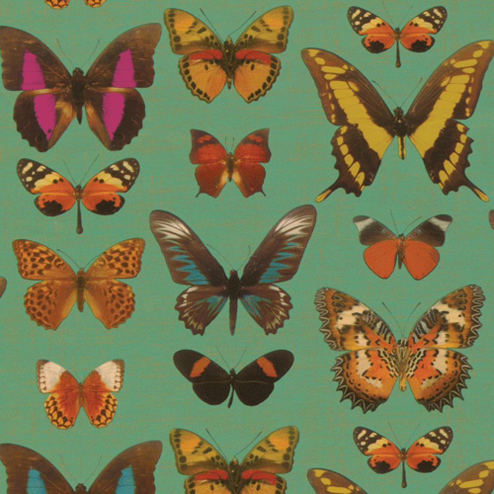 Gift Wrap - Butterflies
