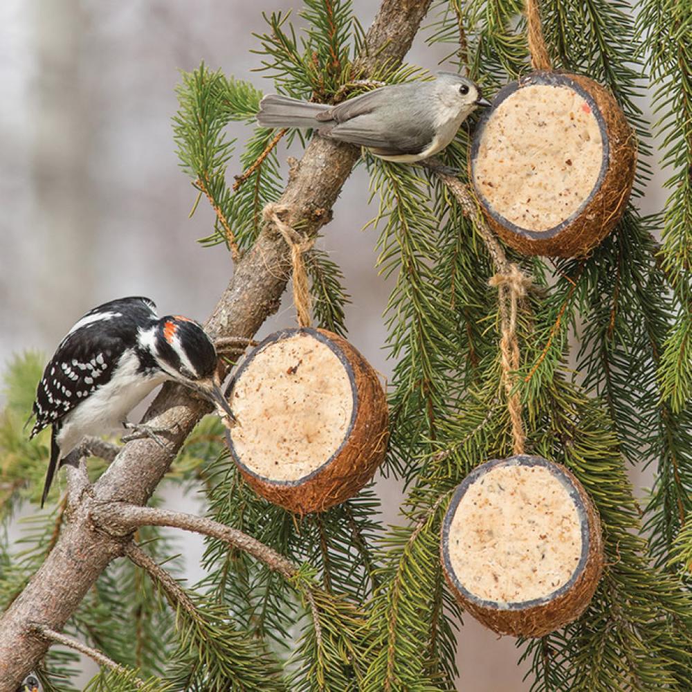 Suet Coconut Shell - Woodpecker
