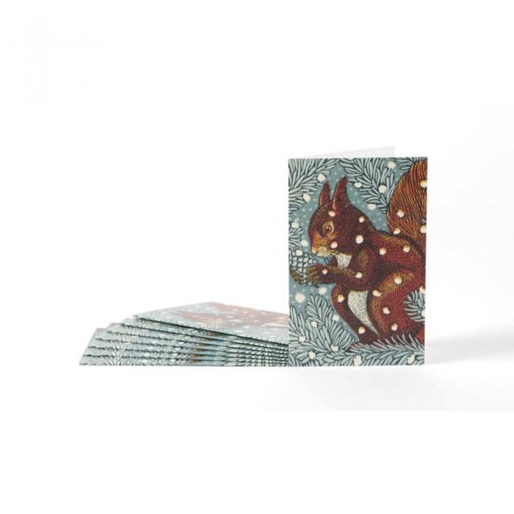Boxed Card - Set of 8 - Red Suirrel