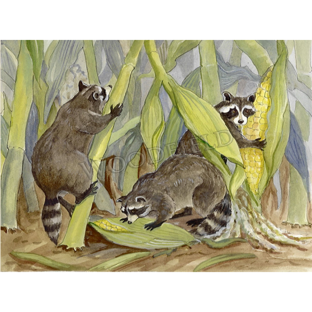 Any Occassion - Raccoons in Corn