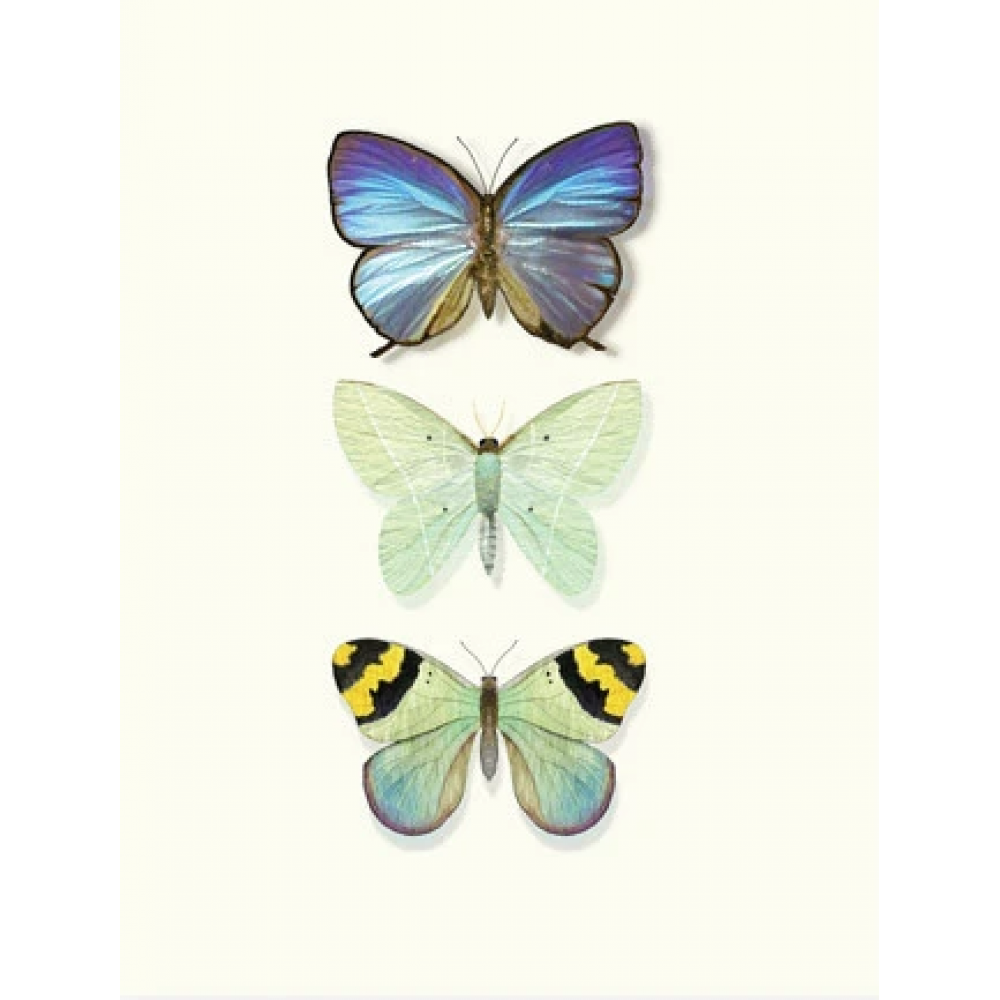 Any Occasion - Butterfly Trio