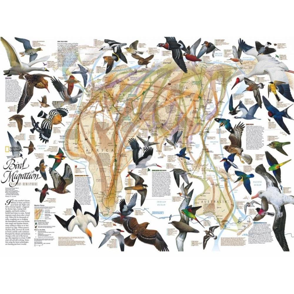 National Geographic Puzzle 1000 Piece Eastern Bird Migration