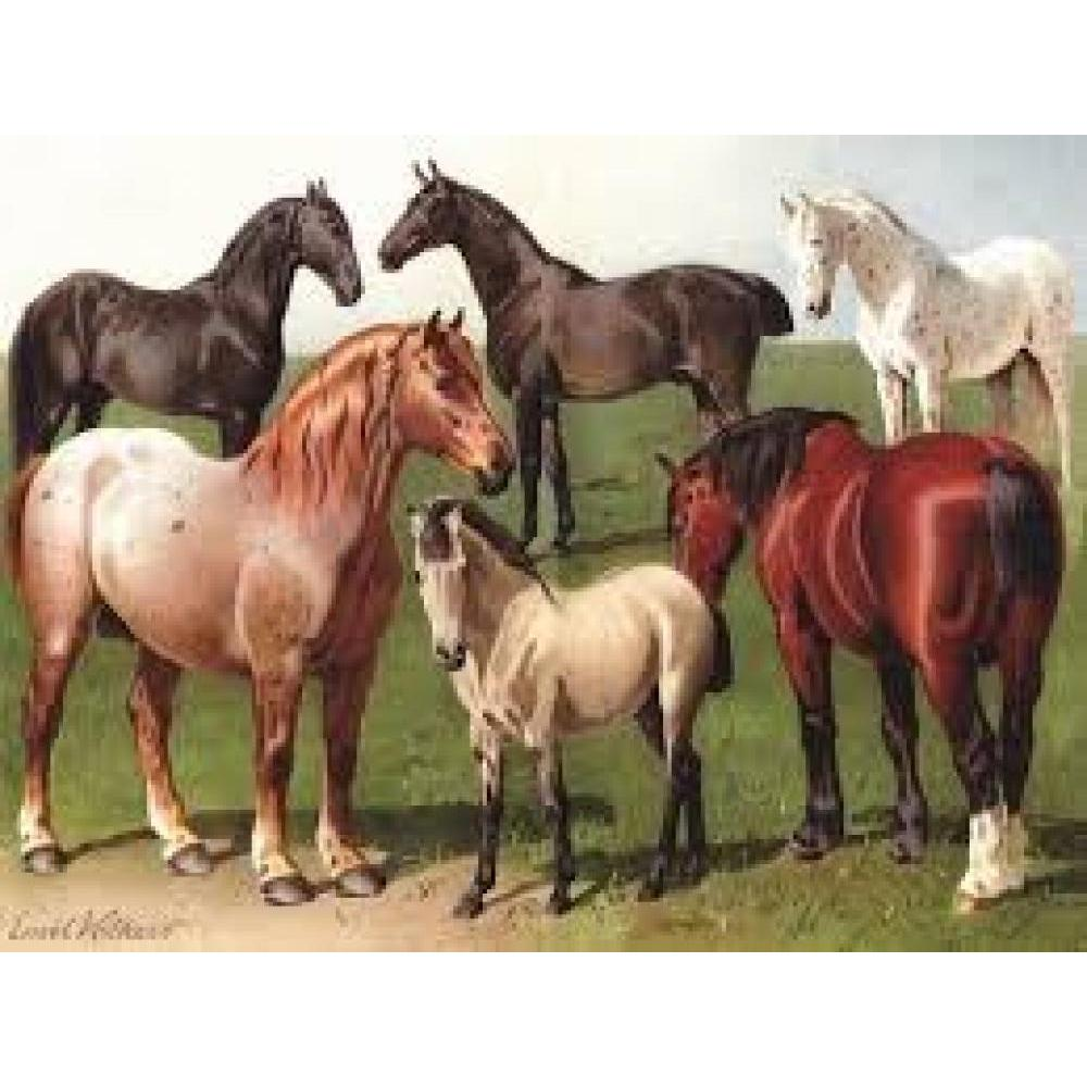 Vintage Collection Puzzle 1000 Piece Horse Breeds