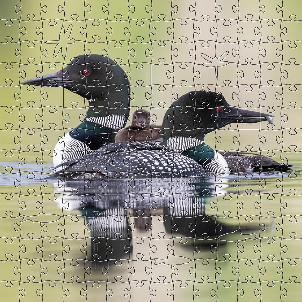Puzzle - 50 Pieces Loons Zen Teaser
