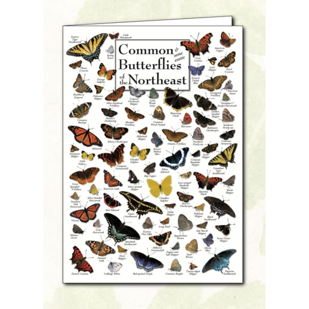 Poster Card - Common Butterflies of Northeast